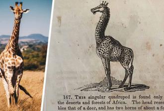 Знали, как 200 лет назад звали жирафа? Мы тоже, пока страница из старого учебника не разорвала все шаблоны