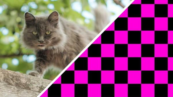 Коты в тиктоке наконец-то вернули 2007-й. Увидев эмо-питомцев, вы забудете о всех своих крашах навсегда