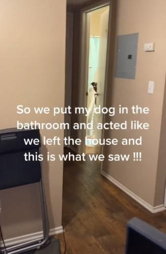 Хозяевам стоило оставить пса одного, чтобы доказать - он человек. Глядя на видео, подумать иначе не получится