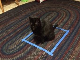 Коты не жидкость, а иллюзионисты. Это доказал биолог, который выяснил, зачем питомцы садятся в квадрат на полу