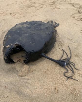 """Любитель прогулок вышел на пляж и попал в фильм """"Чужой"""". Ведь на берег вымыло не рыбу, а целого ксеноморфа."""