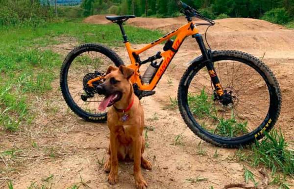 Хайкер удивился поведению собаки в лесу, но всё было не зря. Увидев, куда привёл его пёс, парень застыл