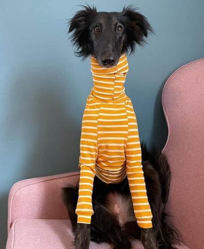 Это жираф? Это гусь? Нет, на фото обычная собака, но при виде её шеи хочется втянуть голову в плечи