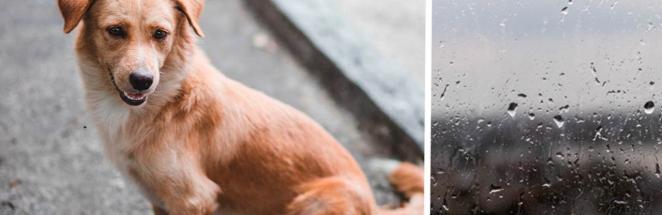 Учёные узнали, чем угрюмые пёсели лучше весёлых. И хозяевам грустных собак можно начинать воспитывать звёзд