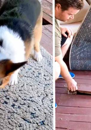 «Кто там, хозяйка?» — залаял пёс на ковёр, и не зря. Незваные гости под ним изменили жизнь девушки