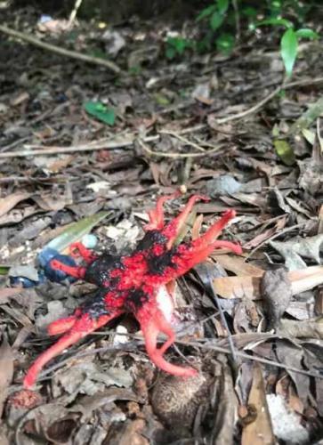 Реддитор увидел на земле нечто, похожее на игрушку. Остаётся надеяться, что он не трогал это существо руками