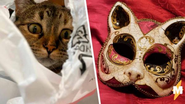 """Тиктокерша зашла домой в маске, и её кот завис. Один взгляд на хозяйку - и в голове пушистого """"синий экран"""""""