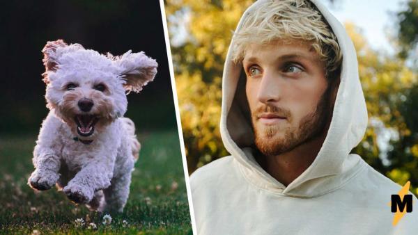 Логан Пол вернул пса-потеряшку хозяйке, а её захейтили. Увидев цвет собаки, вы поймёте, почему девушку ругают