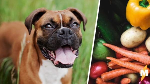 Пара кормила псов веганской едой и осталась без питомцев. Спасатели изъяли щенков, увидев, что с ними стало