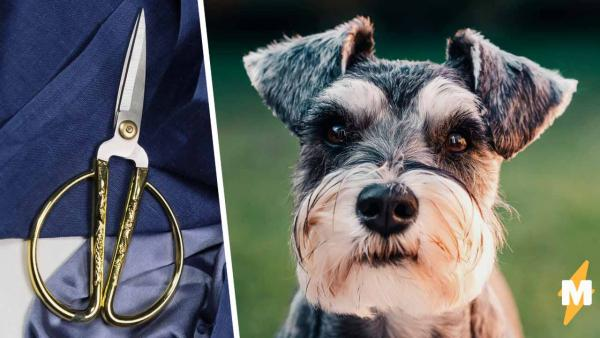 Собака дёргалась во время стрижки, и упс. Перезагрузка пса в разведённую парижанку довела хозяйку до истерики
