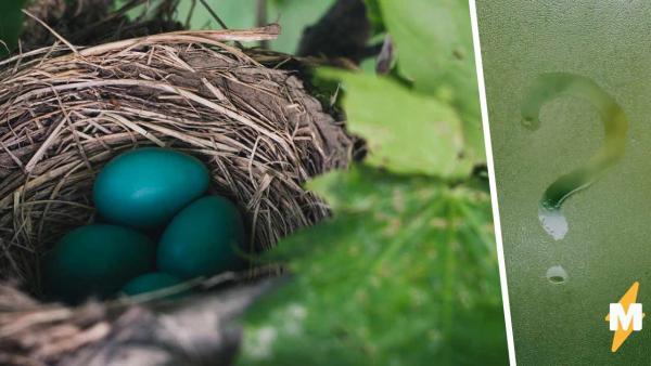 Рабочий нашёл на дереве птичье гнездо и не поверил глазам. Если птицы и были, то уже внутри новых обитателей