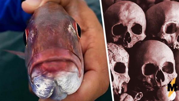 Студент нашёл рыбу и застыл, заглянув ей в рот. Оттуда на него смотрел импостер, которого хочется развидеть