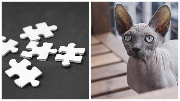 Кошка-сфинкс загуляла с дворовым Васей, и итог - поломка для глаз. Ведь плод их любви - котёнок-конструктор