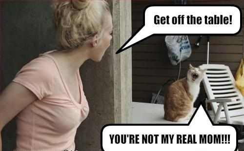 Тиктокерша надела маску и показалась коту. А пушистик завис - ведь