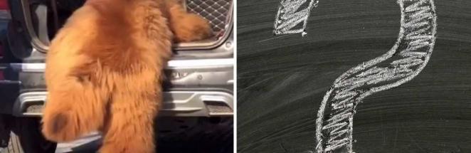 Ты что такое — пёс или медведь? Собачник показал на видео мохнатое существо и сломал зрителей правдой