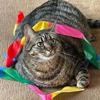 Это пирожок? Это бегемот? Это кошка с широкой костью, и, кажется, мемы придумали, чтобы она стала их героиней