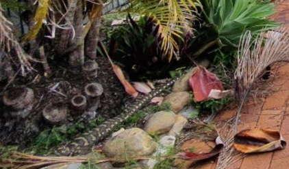 Змееловы показали двухметровую опасность на фото, а видят её единицы. Завалившим этот тест в жизни грозит кусь