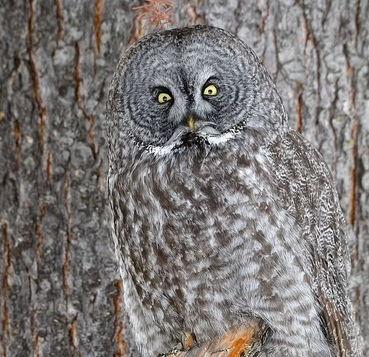 На фото в лесу притаилась сова, но найти её смогут не все. Награда для самых зорких - письмо из Хогвартса