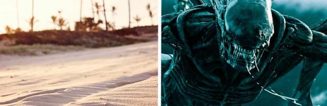 Любитель прогулок вышел на пляж и попал в фильм «Чужой». Ведь на берегу его ждала не рыба, а почти ксеноморф