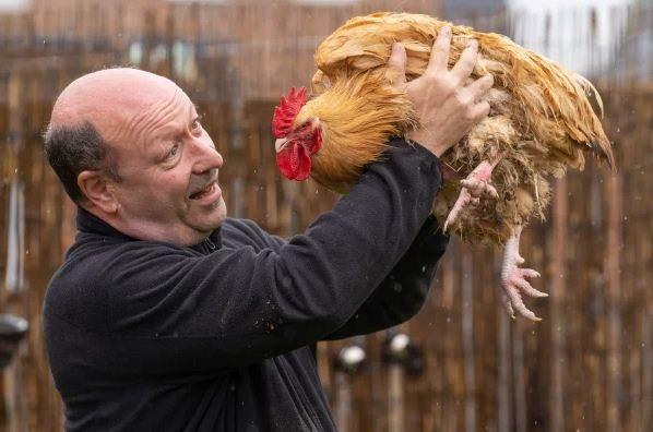 Фермер очень радовался своей курице-несушке, пока не узнал её большой секрет. Да, птицы тоже могут менять пол