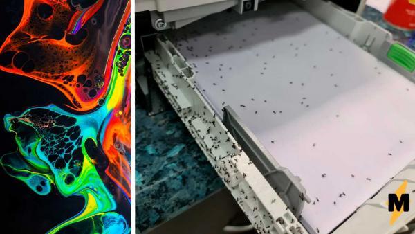 В принтер попали муравьи, и он породил новую цветную рассу. Милее вида насекомых в Австралии ещё не возникало