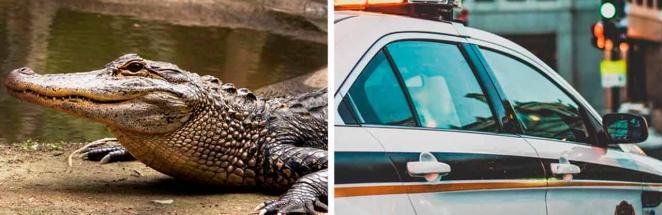 Люди не выходили из дома, боясь крокодила снаружи. После приезда спасателей страшно выходить стало от стыда