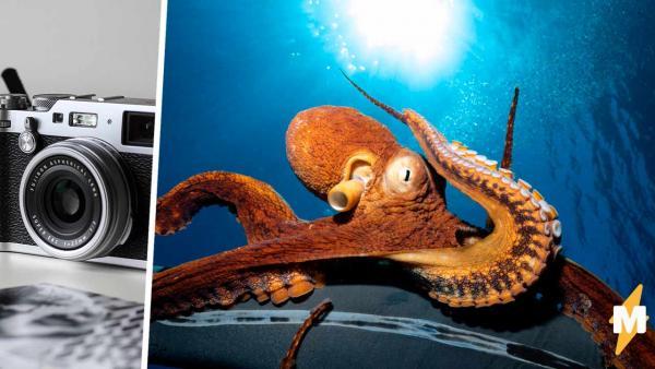 Дайвер устроил подводную фотосессию, но у любопытного осьминога были другие планы.