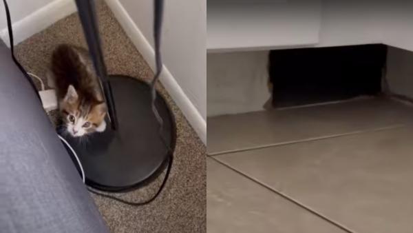 Пара завела котёнка, а тот показал портал в «Проклятье». Ведь от того, что нашёл пушистый, нужно бежать