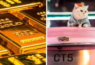 Кошка зарабатывает сотни тысяч рублей в день без хозяина. Секрет пушистой бизнес-леди в любви к авто