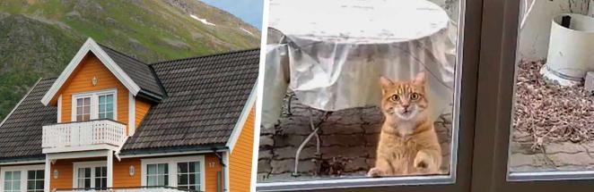 Пара хотела уединиться в новом доме, но помешал старый жилец. Усатый уверен: хозяин может быть только один