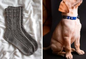Семья не понимала, куда постоянно пропадают носки. Чтобы узнать ответ, пришлось заглянуть в собаку