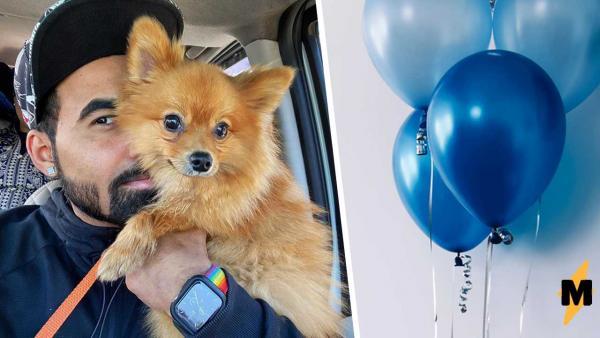 Собак на воздушном шаре заказывали? Никто их не просил, но блогер устроил цирк во дворе и теперь извиняется