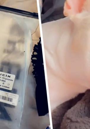Блогерша заказала бельё в онлайн-магазине, а обновке рад её бульдог. Ещё бы, ведь размер комплекта — его