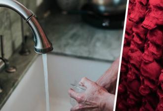 Хозяин дома разобрал фильтр для воды и потерял сон. Внутри он был готов обнаружить что угодно, но не щупальца