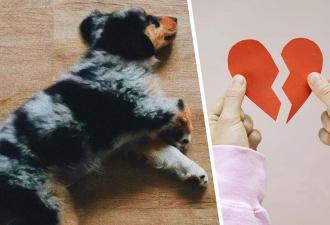 Хозяйка попросила сестру посидеть с собакой, но упс. Родственница не отдаёт питомца, и вы будете на её стороне