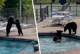 Вы не знаете, что такое отдых, если не отдыхали как медведь. Семь косолапых + бассейн = лучшее релакс-видео