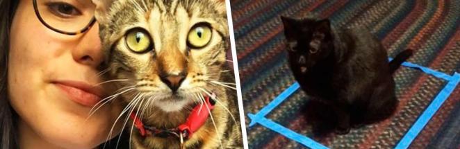 Фантазия котов богаче вашей. Это доказала биолог, выяснив, зачем питомцы садятся в квадрат на полу