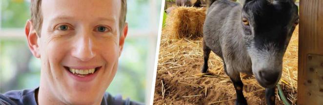 Люди узнали клички коз Марка Цукерберга, и шуткам быть. С такими именами животным дорога на биржу валют