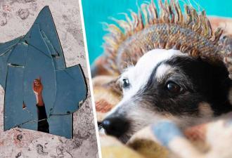 Пёс впервые увидел своё отражение в зеркале и заскулил. Прошло два месяца, а он всё ещё пытается это развидеть