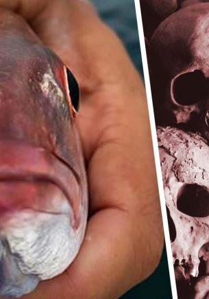 Студент нашёл рыбу и похолодел, заглянув ей в рот. Оттуда на него смотрел импостер, которого хочется развидеть