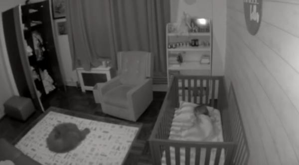 Мама пустила пса в спальню дочери, а в дальнейшее не поверила.