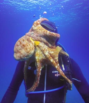 Дайвер устроил подводную съемку, но у осьминога были на него другие планы. Он влез не в кадр, а в самую душу