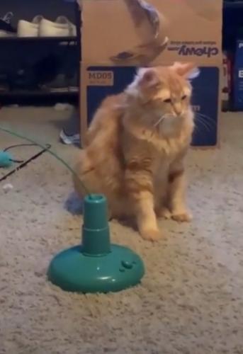 Хозяйка купила коту игрушку, и его реакция на неё - чистый дизлайк. Он - готовый мем и все мы по понедельникам