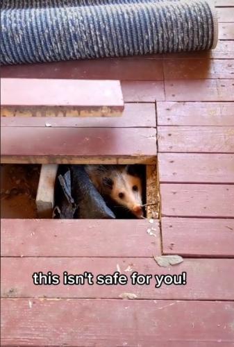 Пёсик блогерши лаял на ковёр, и не зря. Ведь то, что обнаружилось под ним, изменило жизнь семейства навсегда