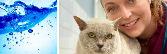 Ветеринар объяснила, почему кисы не пьют из мисок. Дело в диких сородичах, и хозяева поили коть неправильно