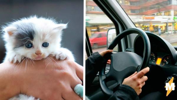 Водитель подобрал котёнка, но зря положил его в карман. Один взгляд на лапки и ясно - это совсем другой зверь