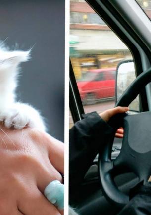 Водитель подобрал котёнка, но зря положил его в карман. Один взгляд на лапки, и ясно — это совсем другой зверь