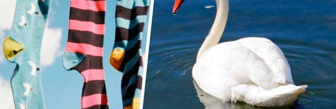 Пара нашла редкого лебедя и не поверила глазам, подойдя ближе. Голова птицы была чёрной совсем не из-за загара