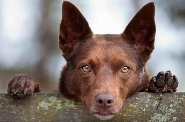Пёс стоит как однушка в России и производит вау-эффект, но другой. Увидев собаню, вы бы отказались от покупки