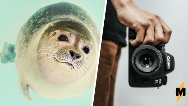 """Чихающие тюлени на видео - АСМР года (и не только). Ведь так мем """"Бать, тебе нормально"""" ещё не косплеили"""